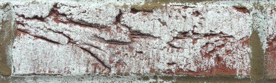 Common efflorescence